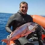 La Pescasub stermina il Dentice: storia di come si costruisce un pregiudizio