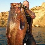 Video Pescasub: la Grande Cernia sorpresa all'agguato (26 kg)