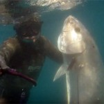 Video Pescasub Ricciola: La sorpresa arriva dal torbido