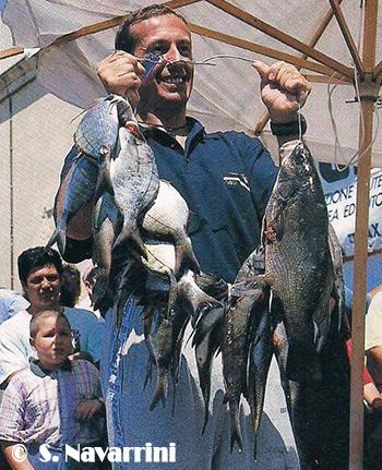 Bardi pesce bianco