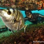 Censimento pesca: Fipia si rivolge al ministro Martina