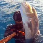 Video Pesca Sub: un Grosso Dentice, in Caduta, nel Bassofondo (6,5 kg)