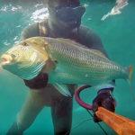 Video Pesca Sub: il Grosso Dentice e le Castagnole (7 kg)