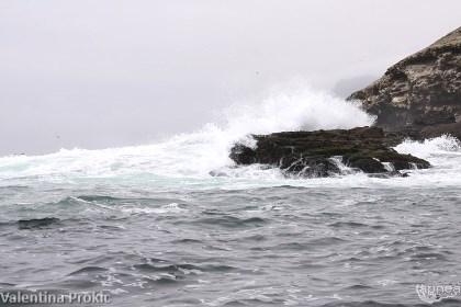 L'onda oceanica ha caratterizzato tutto il campionato (foto V. Prokic)