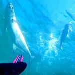 Video Pescasub: una Grossa Leccia Troppo Veloce