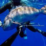 Video Pesca Sub con gli Agonisti: Dario Maccioni e il Mega Dentice in Tana (9 kg)
