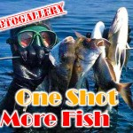 One shot more fish – L'arte della coppiola e non solo…