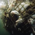 La FAO lancia la sfida delle AMP in acque internazionali