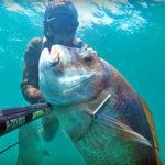 Video Pesca Sub: il Pagro Gigante Fermo nel Bassofondo Sabbioso (12 kg)