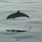 Corsica: i delfini che non ti aspetti…