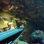 Pescasub Orata_Sarago_Cernia: 3 Tecniche per 3 Pesci  – ISTANTI dal BLU ep.19