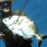 Pescasub all'agguato: Saraghi Oversize – ISTANTI dal BLU ep.17