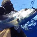 Pescasub Dentice: Dentex Passion 2 – Tra SICILIA e TUNISIA ep.4