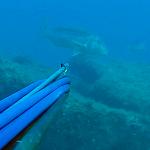 Pescasub: Denticioni padellati e Ricciolona strappata – ISTANTI dal BLU ep.21