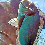 [Video] Pescasub Orata: una Tana d'Oro – ISTANTI dal BLU ep.2