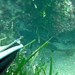 [Video] Pescasub in Inverno: le Corvine della Merla – ISTANTI dal BLU ep.5
