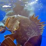 [Video] Pescasub Profonda: Grosse Cernie all'Agguato 2 – ISTANTI dal BLU ep.16