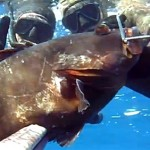 Pescasub in Coppia: Una cernia per due – ISTANTI dal Blu ep.13
