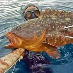 [Video] Pescasub Profonda: Grosse Cernie all'Agguato – ISTANTI dal BLU ep.15