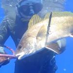 [Video] Pescasub Corvina e Sarago: All'agguato sul Bianco – ISTANTI dal BLU ep.6