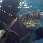 [Video] Pescasub Dentice, Sarago e Corvina: Sorprese nella Posidonia – ISTANTI dal BLU ep.7
