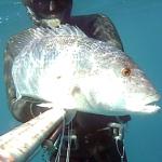 Pescasub Dentice: Il Tramonto si tinge di Rosa – ISTANTI dal BLU ep.22