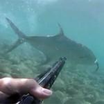 Video Pescasub: La Lecciona in caccia che agguanta il cefalo ma si trova davanti al pescasub