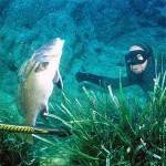 Limiti di cattura del pescatore subacqueo