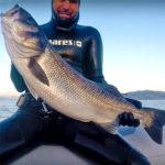 Video Pesca Sub: una Grossa Spigola tra i Saraghi