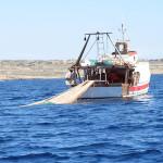 Pesca: i Professionisti stanno Uccidendo il Banco Amendolara con Vetriolo e Strascico