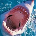 Sub attaccato da squalo in Sardegna: realtà o bufala?