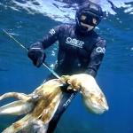 Polpi, Seppie e Calamari in grande aumento negli ultimi 60 anni