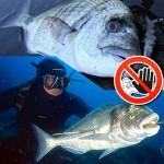 """La Protesta Animalista fa Cancellare la Manifestazione """"Barcolana Pesca"""""""