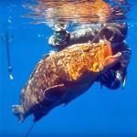 Video Pescasub con i Maestri: Marco Bardi e il Cernione della Secca