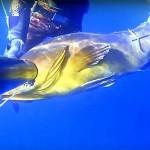 Video Pescasub con gli agonisti: Igor Bisulli, come sparare una cernia in tana