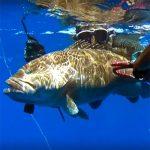 Video Pesca Sub: una Grossa Cernia Bianca in Caduta (12 kg)