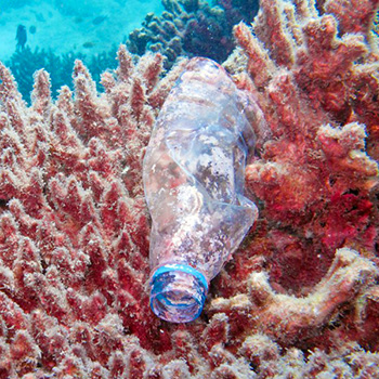 bottiglia corallo
