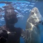 Video Pescasub: la Grossa Spigola a volte ritorna