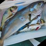 Pesca ricreativa e limite dei 5kg: la nuova normativa complica le cose!