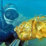 Video Pesca Sub: uno Scorfano Rosso Extra Large (2,5 kg)