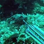 Video Pescasub: il Grosso Scorfano Sfugge a 6 Tentativi di Cattura, e si Salva