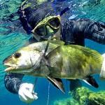 AMP di Capraia, sarebbe la prima a reintrodurre la Pescasub