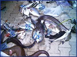 carnieri pesca montenegro