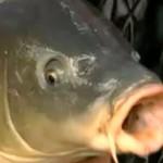 FIPSAS e rischi della carpa, respirazione glosso-faringea