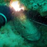 Video Pesca Sub: la Grossa Cernia Fulminata nell'Abisso (29 kg)
