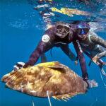 Video Pesca Sub: una Grossa Cernia in Caduta (20 kg)
