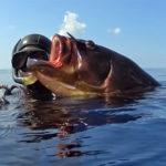 Video Pescasub: la Grossa Cernia e il Tiro Perfetto