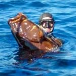 Video Pescasub: Caduta e Tiro perfetti sul Cernione nervoso