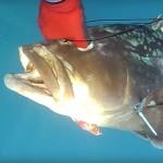 Video Pescasub: la Grossa Cernia si affaccia nel momento Sbagliato