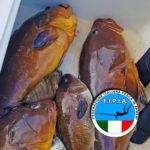 FIPIA: Chi Rappresentiamo? (L'Immagine della Pesca in Apnea Rovinata dai Social Network)